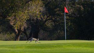 Hans Merensky Golf, South Africa